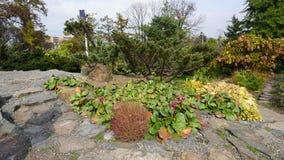 Jardín botánico vladivostok Rusia Imagen de archivo libre de regalías