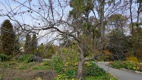 Jardín botánico vladivostok Rusia Fotos de archivo
