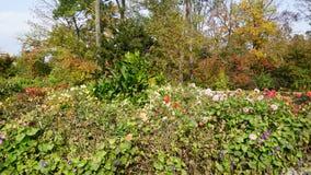 Jardín botánico vladivostok Rusia Foto de archivo libre de regalías