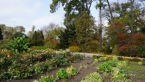 Jardín botánico vladivostok Rusia Imagen de archivo