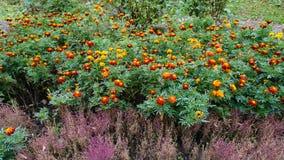Jardín botánico vladivostok Rusia Imágenes de archivo libres de regalías