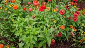 Jardín botánico vladivostok Rusia Fotografía de archivo libre de regalías
