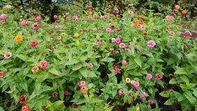 Jardín botánico vladivostok Rusia Fotografía de archivo