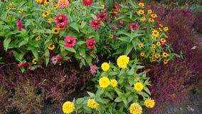 Jardín botánico vladivostok Rusia Fotos de archivo libres de regalías