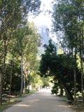 Jardín botánico y Corcovado Foto de archivo