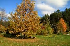 Jardín brillante del otoño Fotografía de archivo libre de regalías