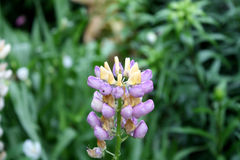 Jardín Campo del jardín Florecimiento de la primavera Imagen de archivo