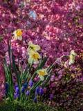 Jardín colorido Fotos de archivo