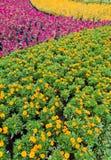 Jardín colorido Fotos de archivo libres de regalías