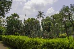 Jardín con el cactus y la palma Imagenes de archivo