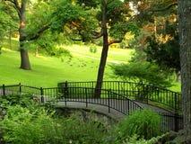 Jardín con el salvaje-ganso Fotografía de archivo