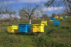 Jardín con las colmenas coloridas Foto de archivo libre de regalías