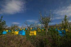 Jardín con las colmenas coloridas Imagen de archivo libre de regalías