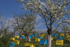 Jardín con las colmenas coloridas Imagenes de archivo
