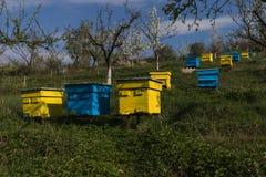 Jardín con las colmenas coloridas Imágenes de archivo libres de regalías