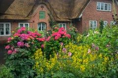 Jardín con las flores Fotos de archivo