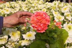 Jardín con las flores Fotos de archivo libres de regalías