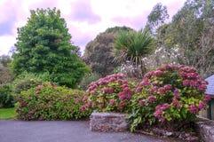 Jardín con las flores Imagen de archivo libre de regalías