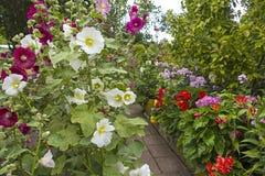 Jardín con las malvas y el polemonio florecientes Fotos de archivo libres de regalías