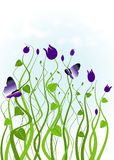 Jardín con las plantas púrpuras Foto de archivo libre de regalías