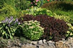 Jardín con las plantas verdes y rojas Fotografía de archivo libre de regalías