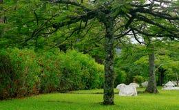 Jardín con las rocas blancas imagen de archivo