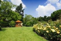 Jardín con las rosas y la lavanda Foto de archivo libre de regalías