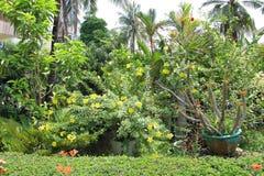 Jardín con los árboles y las flores Imagen de archivo