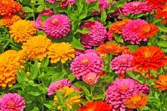 Jardín con magnífico multicolor Fotografía de archivo