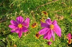 Jardín con muchas flores rosadas y hojas verdes fotografía de archivo