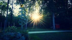 Jardín con puesta del sol imagen de archivo libre de regalías