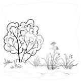 Jardín con un arbusto, contornos Fotografía de archivo