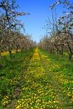 Jardín de Apple Imagen de archivo libre de regalías