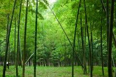 Jardín de bambú Fotografía de archivo