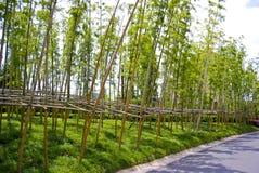 Jardín de bambú Imagen de archivo