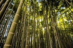 Jardín de bambú en Kamakura Japón Foto de archivo