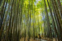 Jardín de bambú en Kamakura Japón Foto de archivo libre de regalías