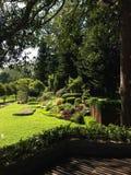 Jardín de Beautifui en terraza con la terraza de madera Imagen de archivo