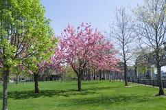 Jardín de Boston Foto de archivo libre de regalías