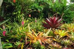 Jardín de Bromeliad. Fotografía de archivo