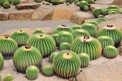 Jardín de Cactoo Foto de archivo