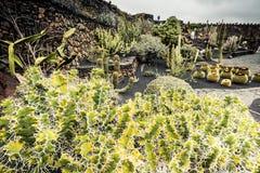 Jardín de Cactoo Imagenes de archivo