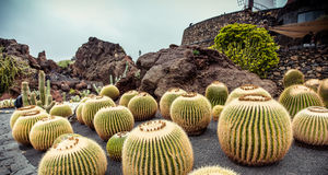 Jardín de Cactoo Imagen de archivo libre de regalías