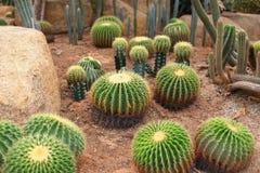 Jardín de Cactoo Fotos de archivo