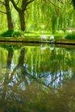 Jardín de cisnes Foto de archivo libre de regalías
