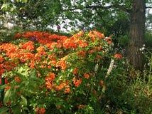 Jardín de Claude Monets Imagen de archivo libre de regalías