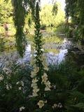 Jardín de Claude Monets Fotografía de archivo