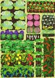 Jardín de cocina stock de ilustración