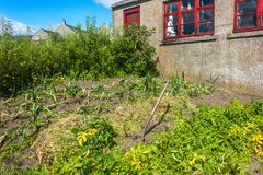 Jardín de cocina Las Orcadas, Escocia Fotografía de archivo libre de regalías