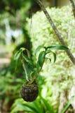Jardín de colgante Un pote del coco de la flor Fotos de archivo
